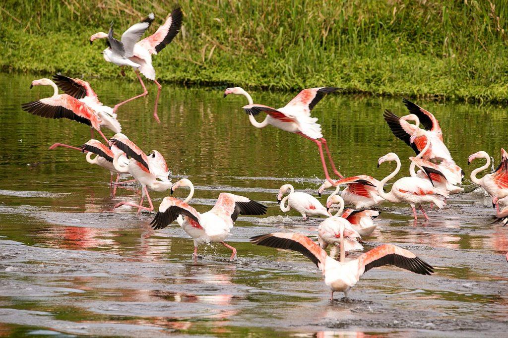 Flamingos Península de Yucatán celestún